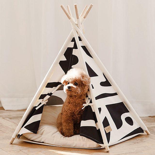 帳篷式睡床、玩具隧道毛小孩保證愛翻!網友激推「11款寵物居家小物」!