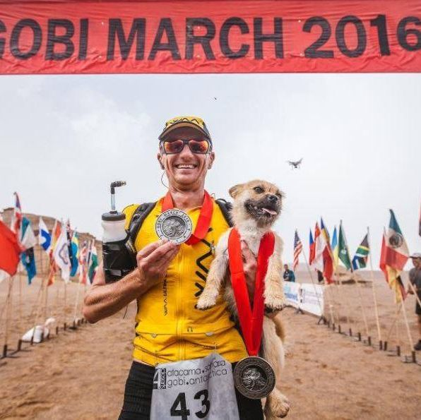 Four dogs that have done some seriously impressive running