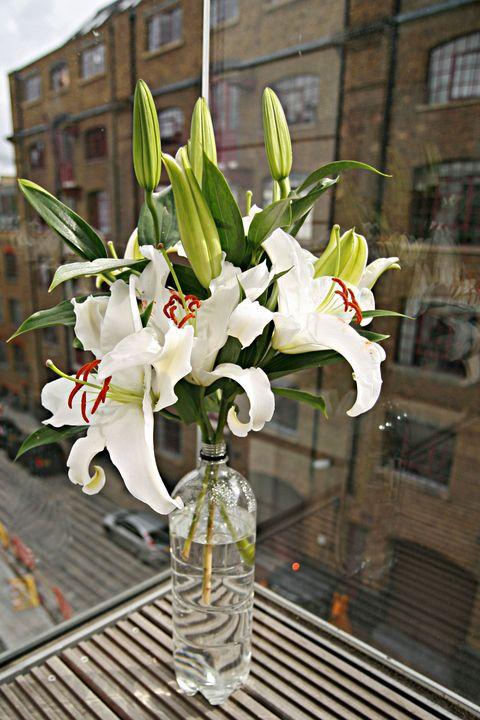 Flower, White, Plant, Floristry, Flowering plant, Lily, Bouquet, Flower Arranging, Cut flowers, Spring,
