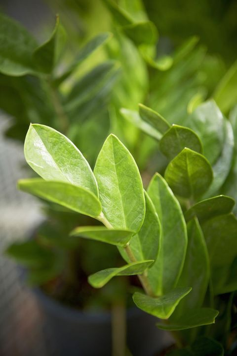 11 Plants That Don T Need Water Easy, Outdoor Plants That Don T Need Sunlight Or Water