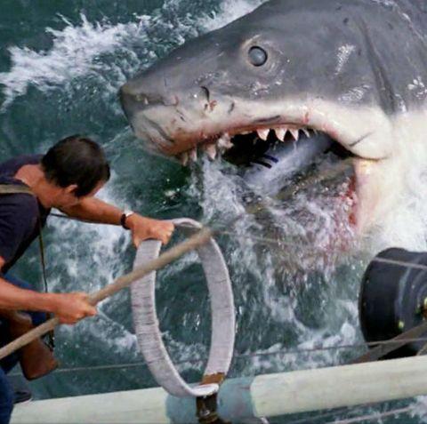 tiburón película