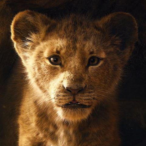 Mammal, Vertebrate, Wildlife, Lion, Felidae, Terrestrial animal, Whiskers, Big cats, Snout, Carnivore,
