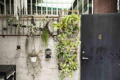 嘉義私房景點green wall floral