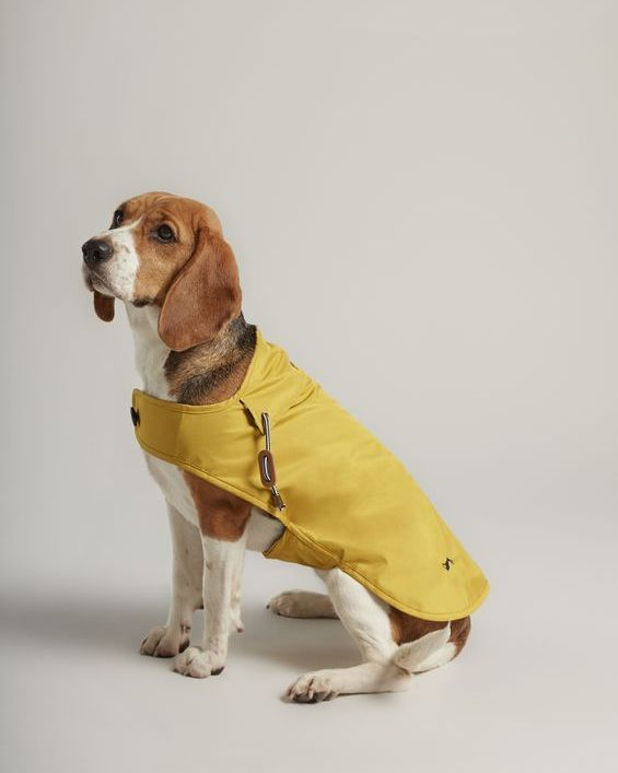 Joules is selling matching dog and adult waterproof jackets