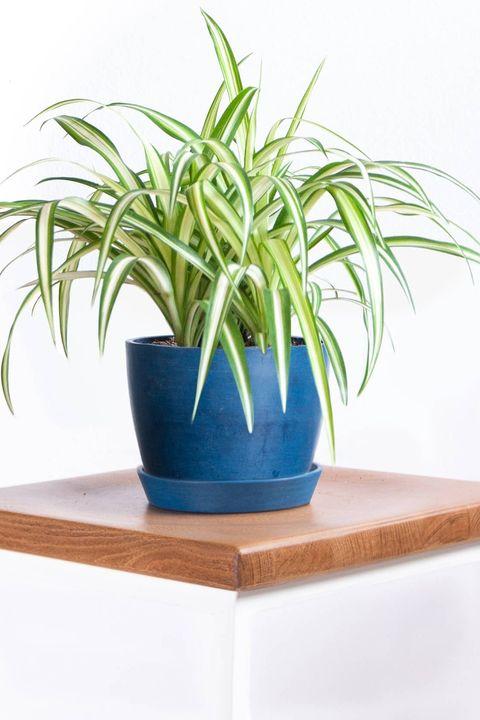 kamerplanten in de schaduw deze planten hebben weinig licht nodig