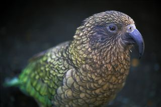 The 25 Weirdest Birds | Strange Birds