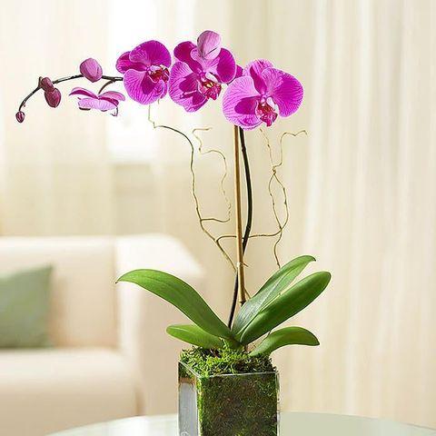 1 800 flowers elegant orchid