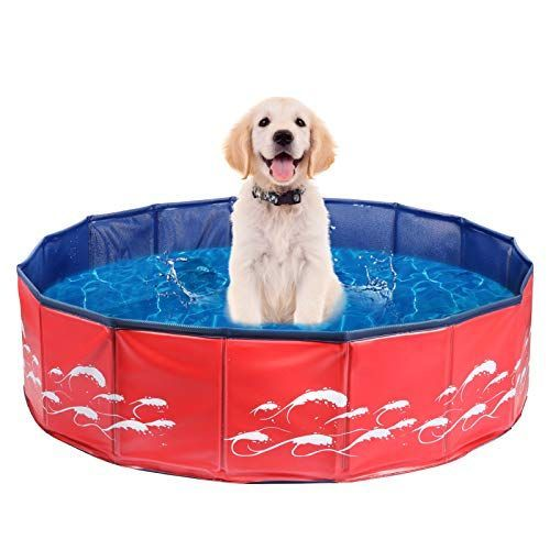 dog paddling pool