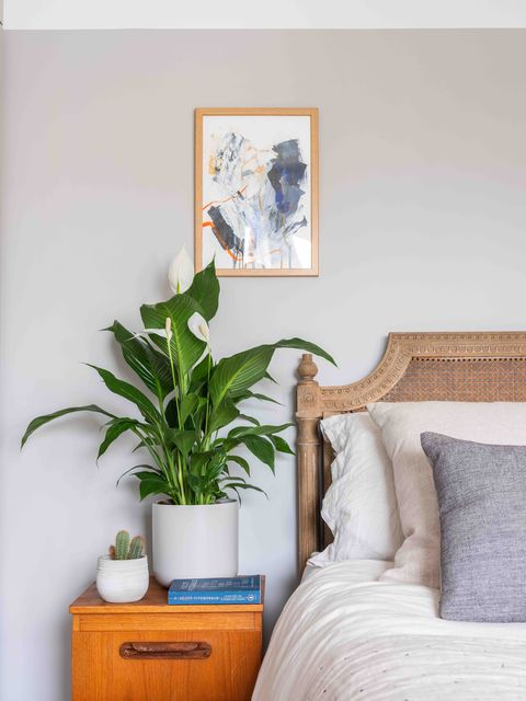 peace lily, bedroom