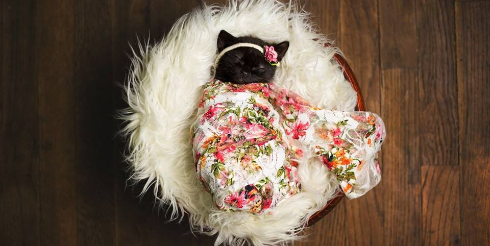 This Newborn Photo Shoot Stars the Cutest Kitten in All the World