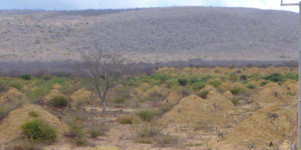 Descubren una megaciudad construida por las termitas