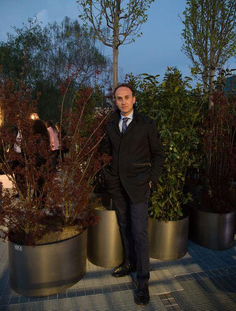Tree, Botany, Plant, Houseplant, Suit,