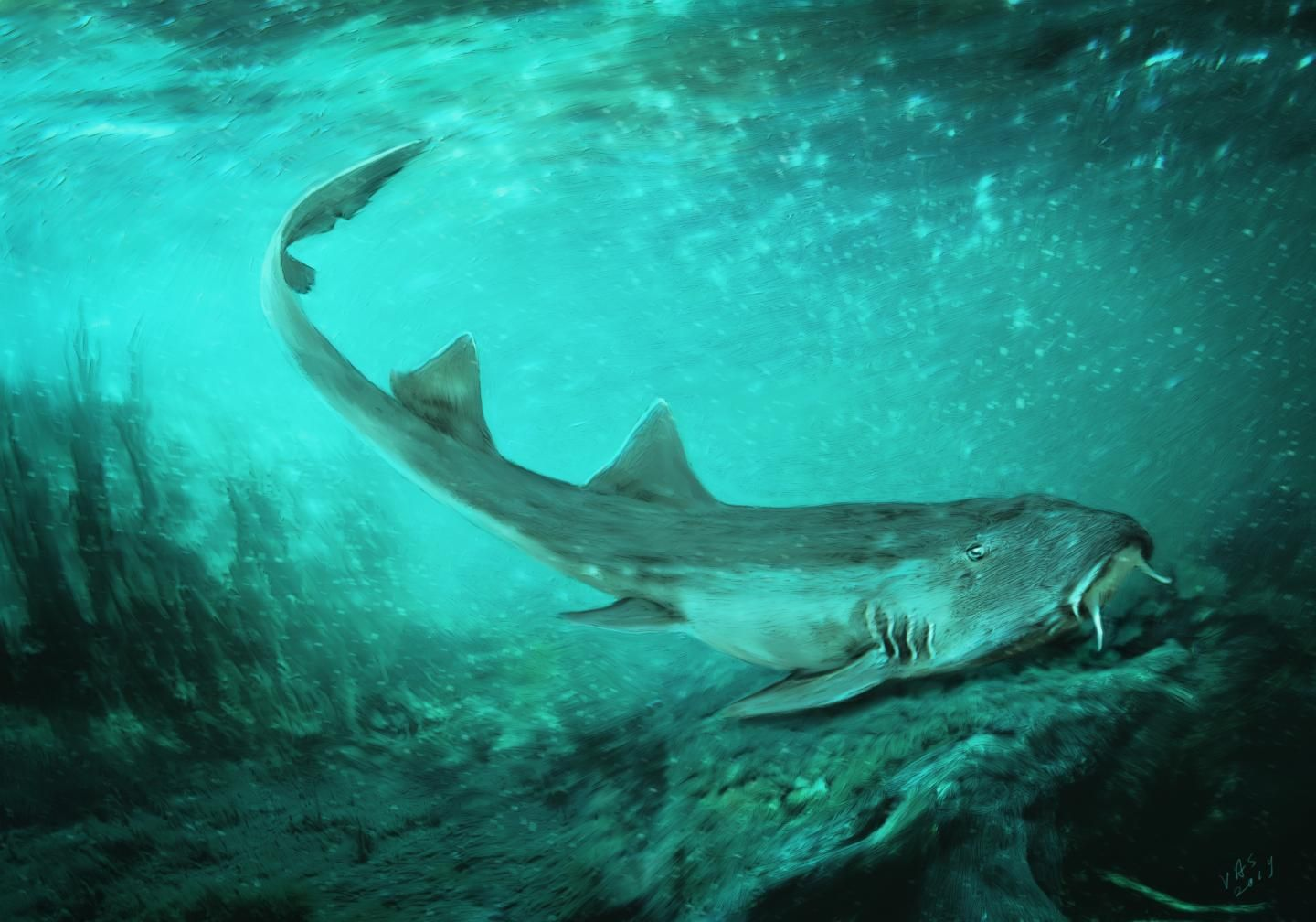 A New Shark Species Was Found in the Mud of Sue the T. Rex