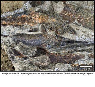 berkely fish dinosaurs