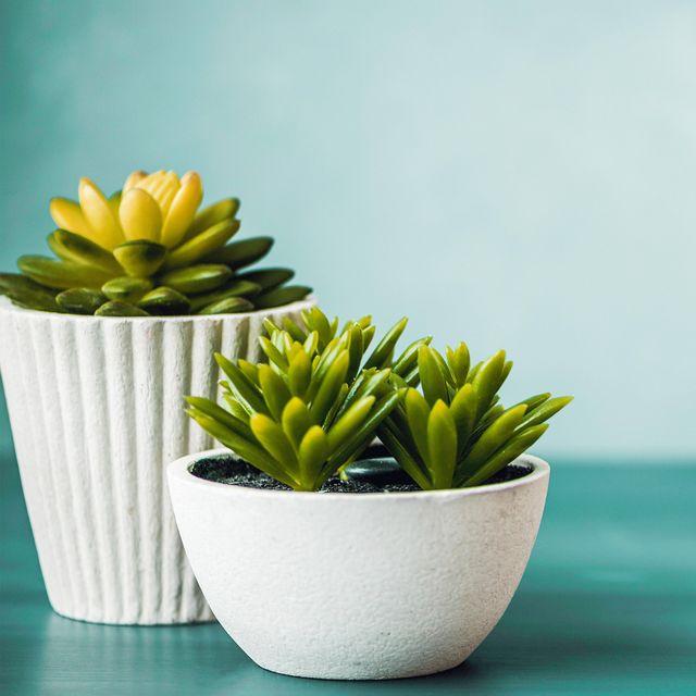 3eebf4fa373 12 Best Amazon Plants to Buy, Including Live Indoor Plants and ...