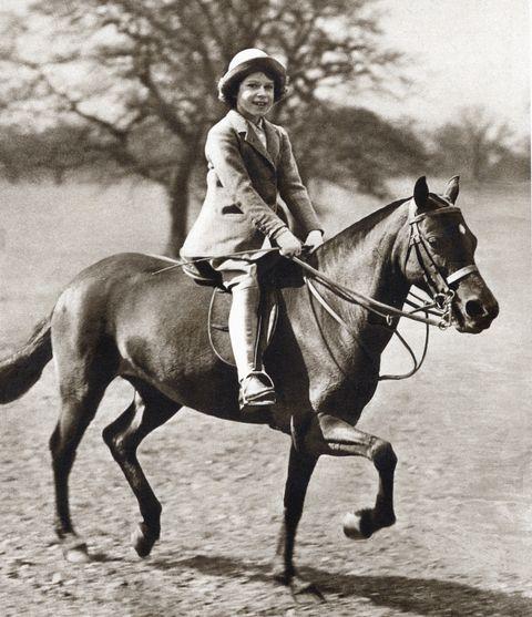 Horse, Bridle, Rein, Mammal, Halter, Horse tack, Photograph, Saddle, Equestrianism, Mane,