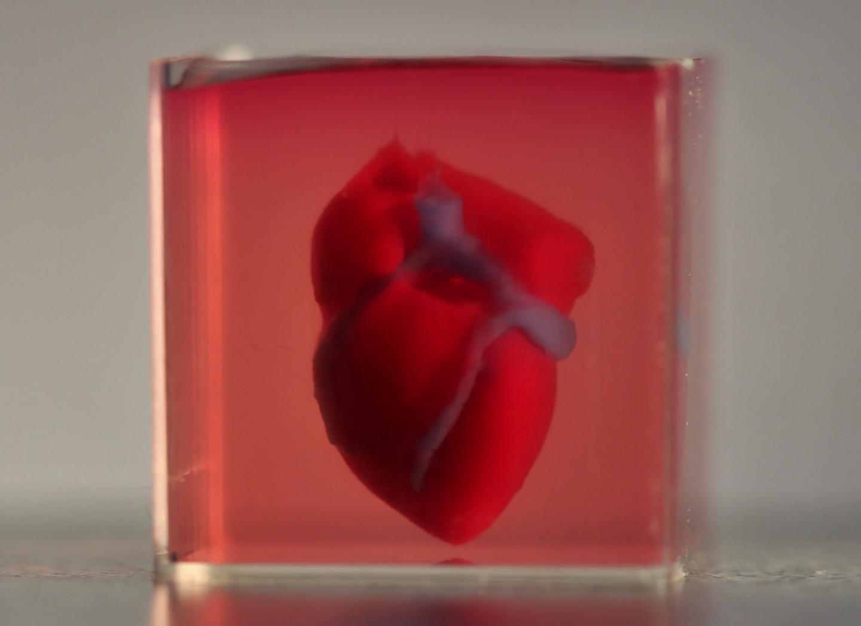 Por primera vez imprimen un corazón humano en 3D
