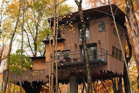Tree, Leaf, Autumn, House, Biome, Woody plant, Tree house, Plant, Branch, Northern hardwood forest,