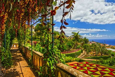 Explore Madeira in the best possible way – with a celebrity gardener