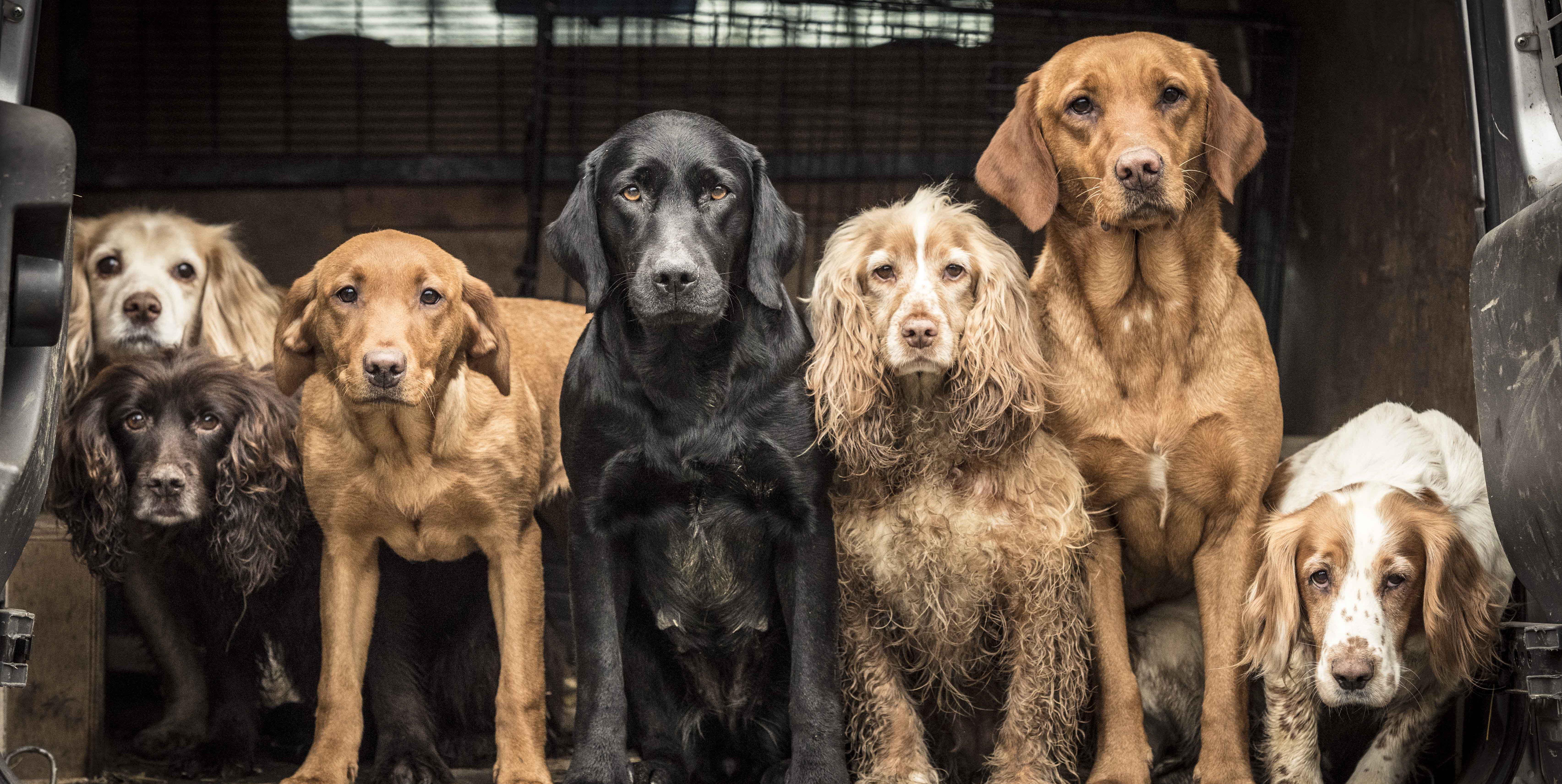 10 winning photos of The Dog Photographer of the Year 2018 revealed