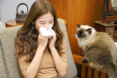貓奴的過敏有救了!雀巢首創「降低貓唾液過敏原」頂級乾糧,加碼線上幫助浪浪的4個方法