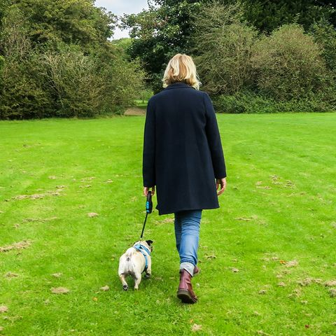 Leash, Grass, Canidae, Dog walking, Dog, Companion dog, Dog breed, Walking, Lawn, Grass family,