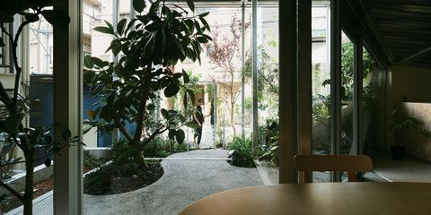 Property, Houseplant, Room, Botany, Building, Interior design, Plant, House, Architecture, Tree,