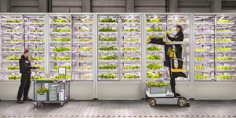 スーパーマーケットで野菜を栽培・販売「infarm」