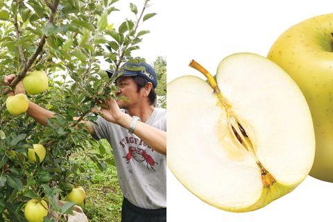 日本農業株式會社青森富士蜜蘋果