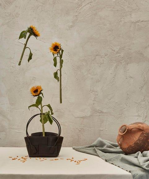 Flower, Flowerpot, Still life photography, Ikebana, Plant, Sunflower, Still life, Botany, Cut flowers, Floral design,