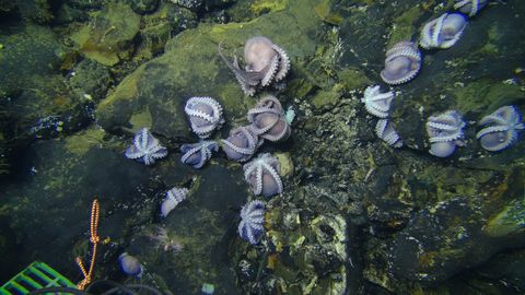 Water, Organism, Marine biology, Plant, Watercourse, Underwater, Rock,