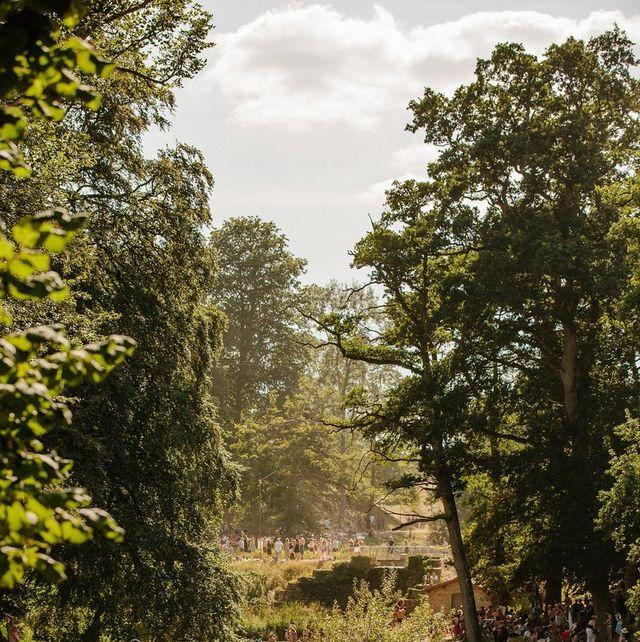 Nature, Water, Natural environment, Tree, Grass, Bank, River, Wildlife, Leaf, Adaptation,