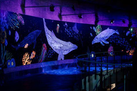 屏東海生館打造「與鯨共舞」光影互動投影牆