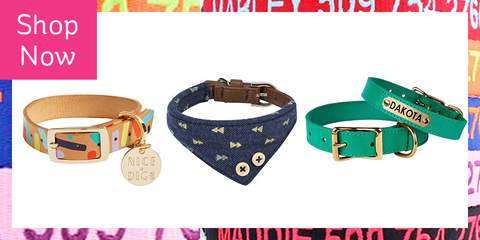 40705dc06d33 20 Cool Dog Collars - Best Useful and Stylish Dog Collars