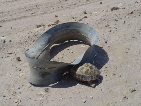 Turtle, Tortoise, Tire, Sand, Automotive tire, Personal protective equipment,