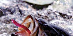 fresh-caught-fish.jpg