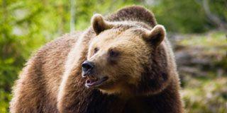 1204-bear.jpg