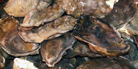 OysterSlider.jpg