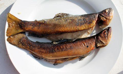 Smoke Freshly Caught Fish