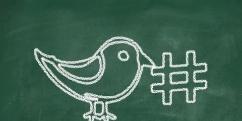 hashtag-bird.jpg