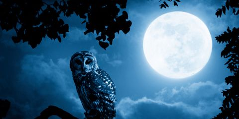 night-owls.jpg