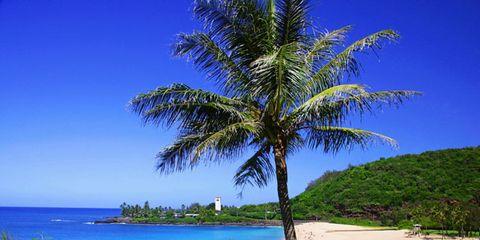 oahu-hawaii.jpg