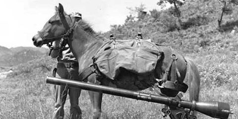 Sgt_Reckless_with_recoilless-rifle.jpg