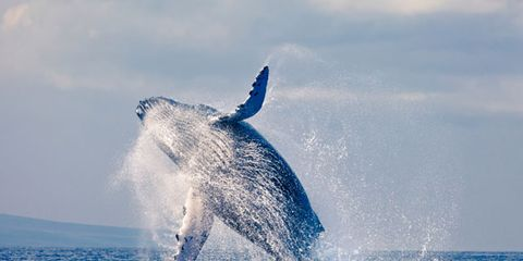 whales-ambergris.jpg