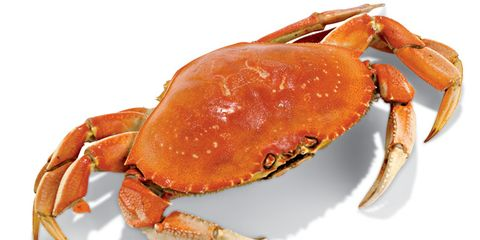 dungeness-crab.jpg