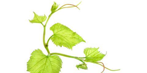 grape-leaves.jpg