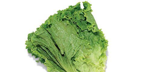 green-leaf-lettuce-644x409.jpg