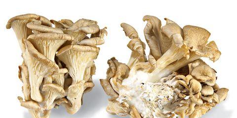 oyster-mushroom-nutrition-facts.jpg