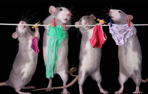 What Sexy Rat Lingerie Tells Us about Our Own Kinks