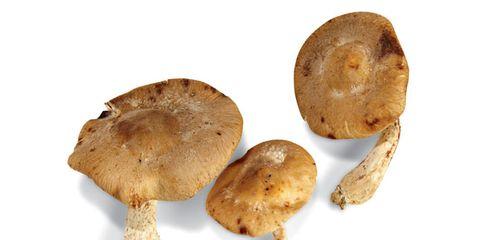 shiitake-mushroom-nutrition-facts.jpg